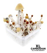 XL size Cambodian All in One Growkit