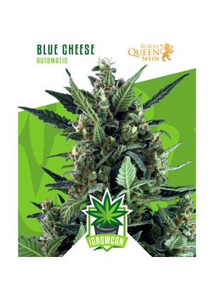 Igrowcan - Blue Cheese Automatic