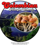 Colombian - Psilocybe Cubensis