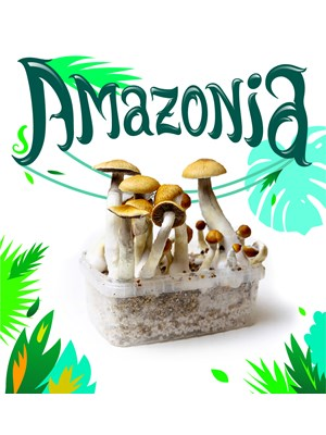 Amazonia - Magic Mushroom Growkit